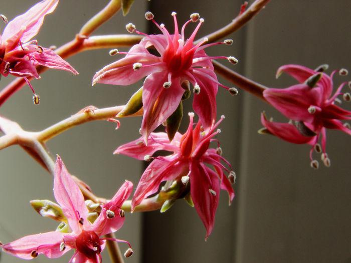 Beautiful Nature Beauty In Nature Blütenschönheit Blütenzauber EyeEm Nature Lover Filigran Flowers Macro Photography Macro_collection