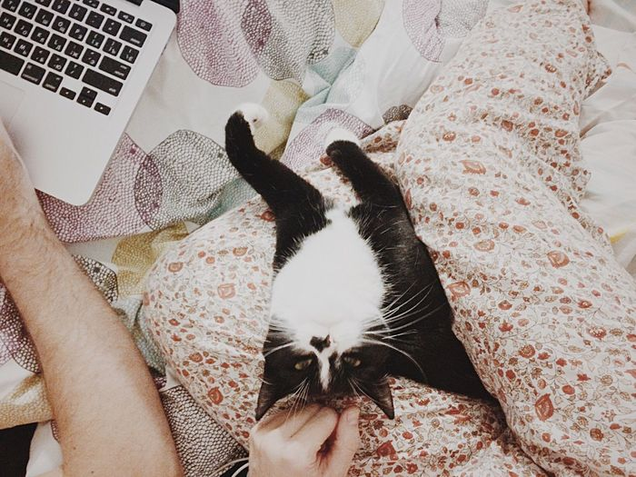 Directly above shot of man and woman with cat by laptop on bed