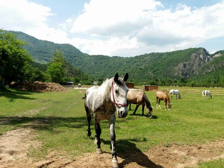 Domestic Animals Animal Themes Cloud - Sky Mountain Day Livestock Sky Outdoors Nature Lake Lake Grass Beauty In Nature Mammal No People Tree Horses Horse Photography  Horse Life Horselove Horse <3 Bosnia And Herzegovina