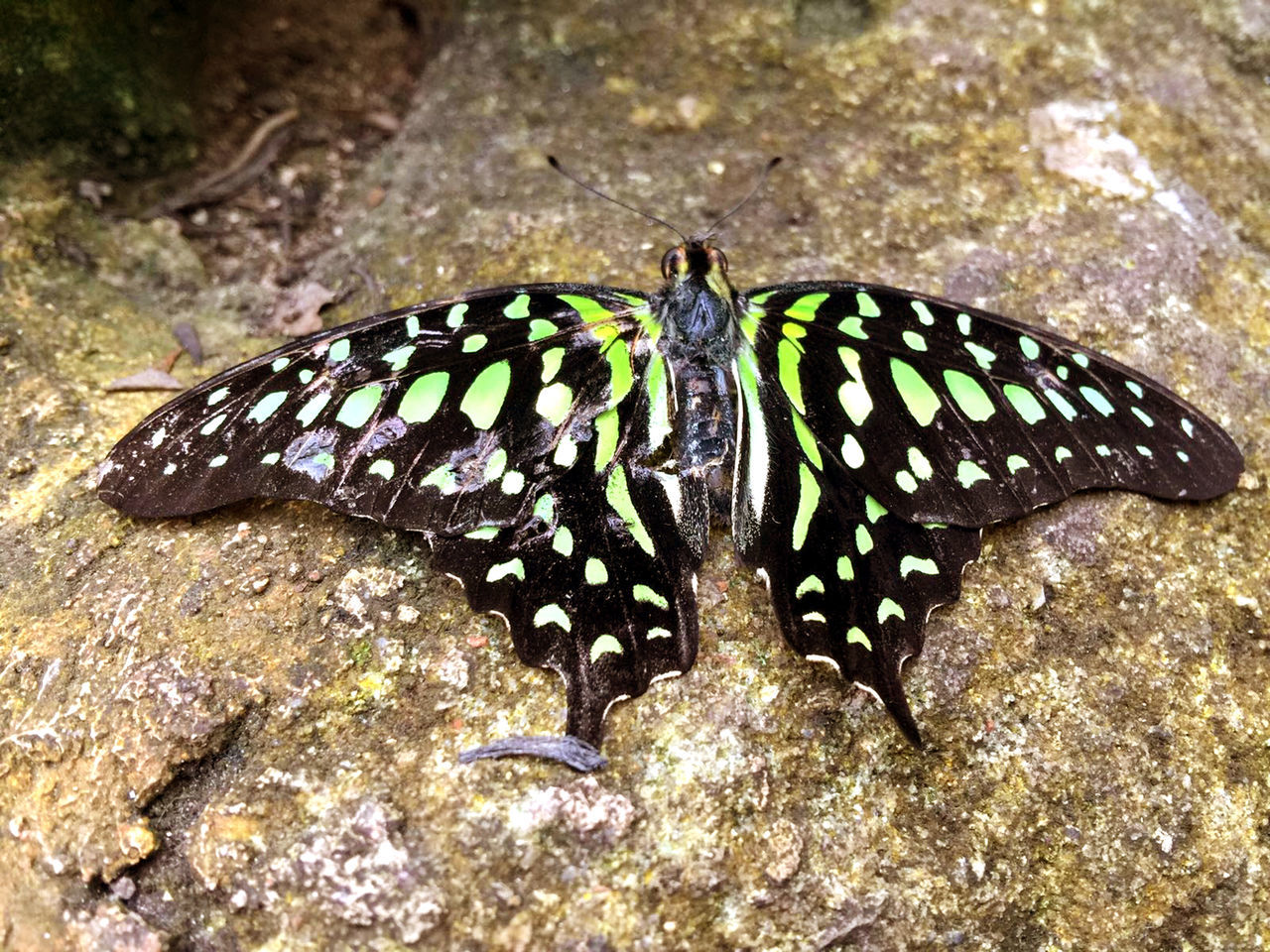 animal themes, animals in the wild, one animal, animal wildlife, insect, nature, butterfly - insect, no people, outdoors, day, animal markings, close-up, full length, beauty in nature