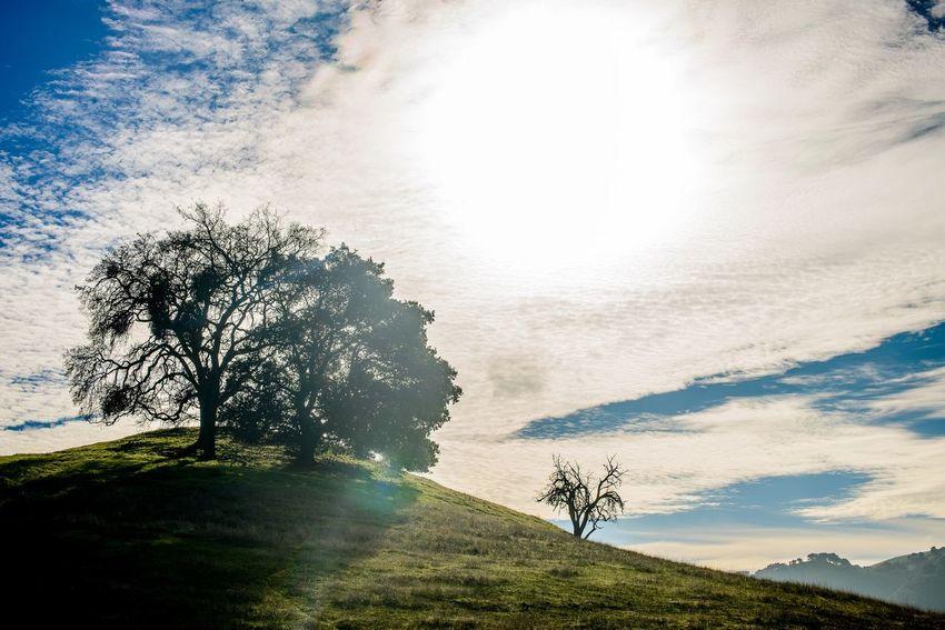 The Ridge Landscape Eye4photography  EyeEm Best Shots EyeEm Best Edits EyeEmBestPics Nikon Beauitful California Bay Area Nifty Fifty