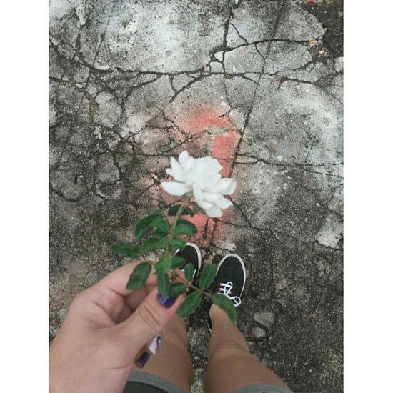 Uma rosa branca em nome do meu gatinho Xu, que morreu...Triste Amodemais Saudade Always Parededevidro
