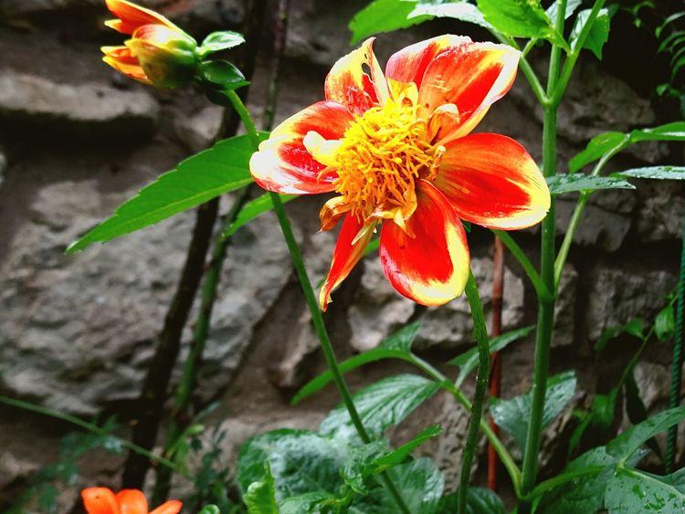 Flowers Flowers,Plants & Garden Garden