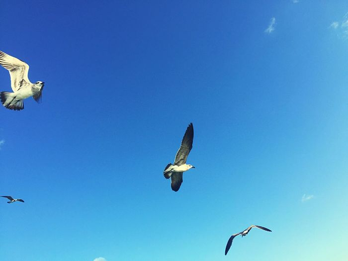 Secuencia Blue Sky Cuba Flying Secuencia Relaxing Enjoying Life Cloud - Sky Seagle