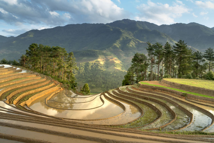 The image is as beautiful as the oil painting of terraced field. Curved lines of Terraced rice field during the watering season at the time before starting to grow rice in Mu Cang Chai Agriculture Curves Farm Farmer Land Mu Cang Chai-Yen Bai-Vietnam Rice Terrace Travel Vietnam Yen Bai Vietnam Coloful Culture Environment Filed Harvest Havesting Horticulture Landscape Mountain Scenics - Nature Season  Terraced Field Tranquil Scene Valley