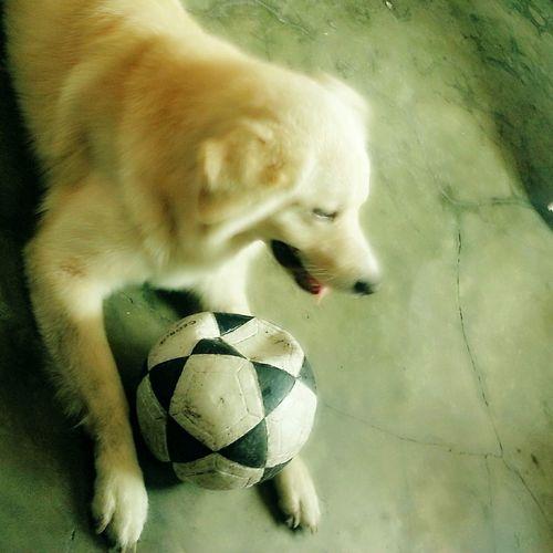 Mi bebé Relaxing Futboltime :3 Home Sweet Home