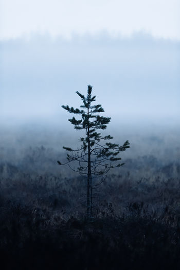 Small tree, foggy forest