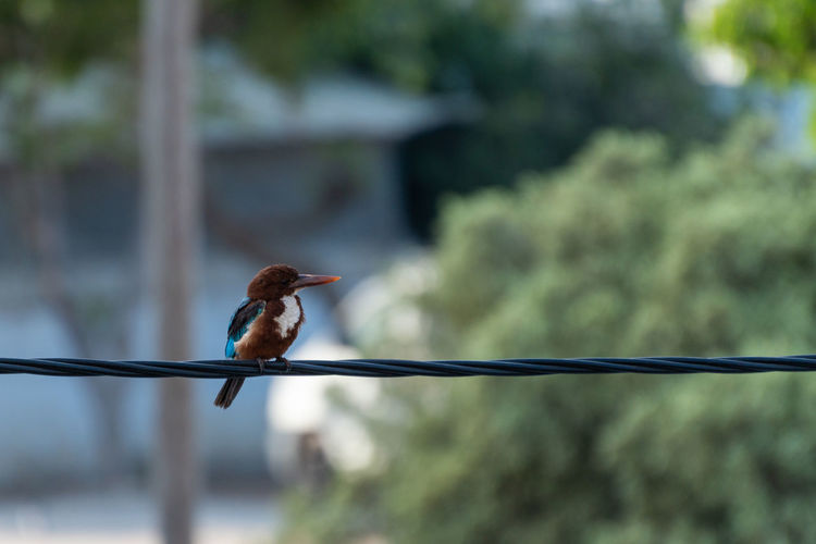 Close-up of bird perching on cable