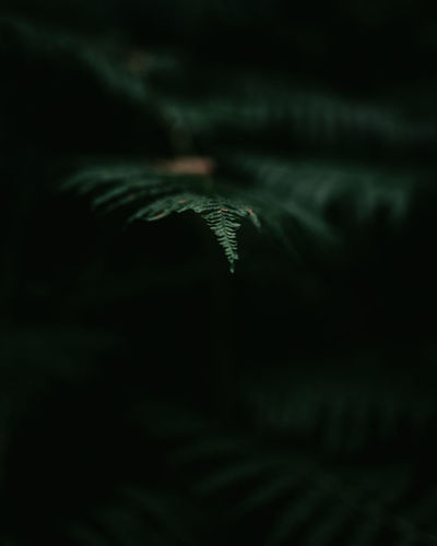 the forest is my sanctuary Check This Out EyeEm Best Shots EyeEm Nature Lover Natural Beauty Nature Nature Photography Taking Photos Beauty In Nature Close-up Depth Of Field Fern Forest Landscape Nature Nature_collection Outdoors
