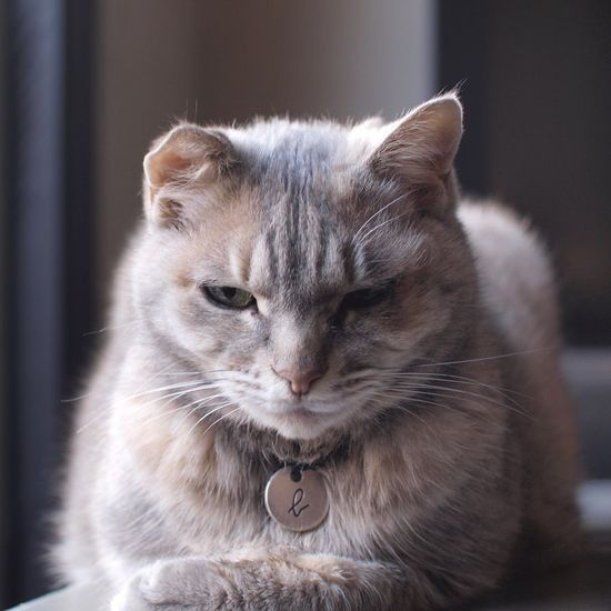 最近穏やかなおやびん。シャー!言われなくなった。 Cat 猫 Angrycat Oyabin