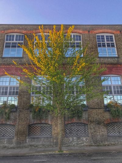 Building Exterior Architecture Built Structure Window Outdoors Day Tree No People Low Angle View City Nature Sky Unseen London London