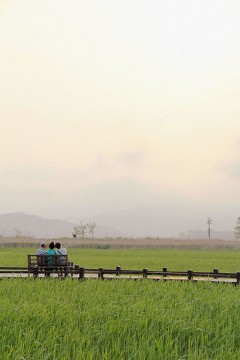Family South Korea Wetland Beauty In Nature Day Field Grass Landscape Nature Outdoors Rural Scene Scenics Sky Springtime Suncheon Bay Sunset