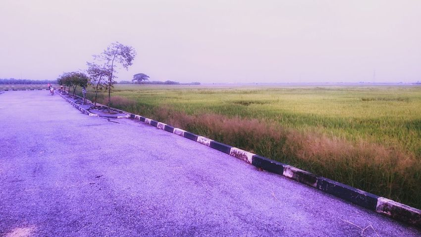Rice Fields At Mergong Alor Setar Kedah Malaysia Flower Water Rural Scene Purple Field Grass Empty Road Agricultural Field Lavender Colored