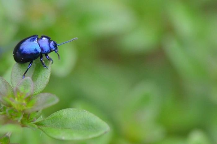 Nikon D5100  Naturelovers Amazing Creatures Amazing Photography Hobby Wildlife & Nature Beauty In Nature Nikon Summer Holland Insects