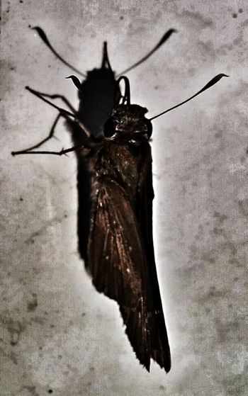 What a beautiful creature! Insect Butterfly Life Cool Bugs Nature Insecto Wings Beautiful Lovebugs 生命 蝴蝶 昆蟲 自然 動物