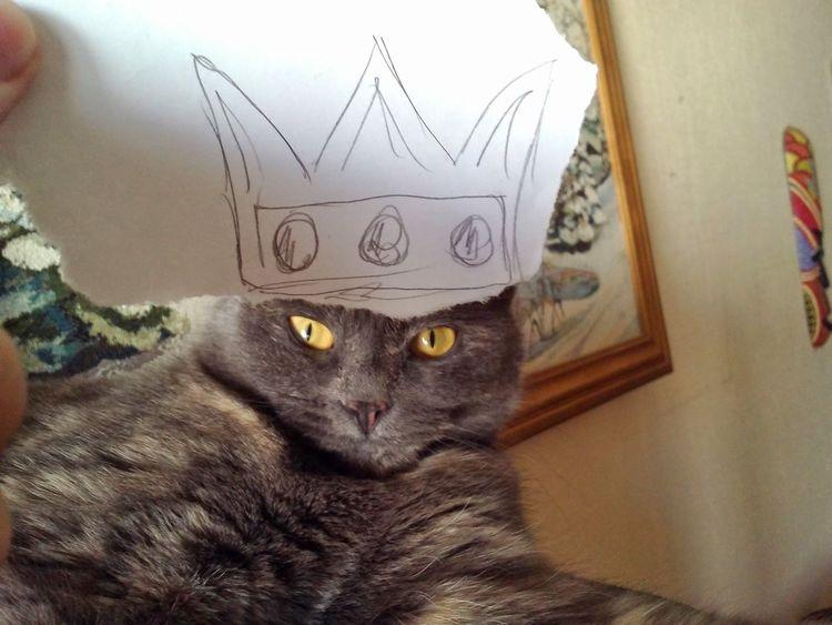 кошка король Animals Cat