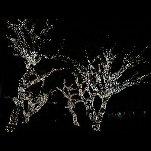 Pretty lit up tree's Sukothai Nature Experiaz1