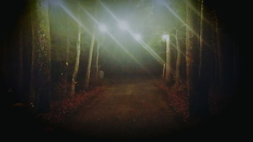 Nightlights Rural Scene Country Driveway All Lit Up Look Into The Darkness  Forest Path Nightview Creepyplaces
