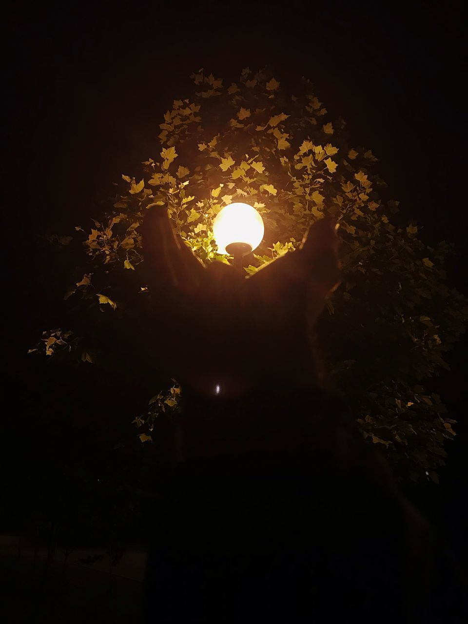 illuminated, night, lighting equipment, no people, nature, outdoors, low angle view, sky, tree, dark, glowing, orange color, flame, beauty in nature, technology, yellow, light - natural phenomenon, electricity, branch