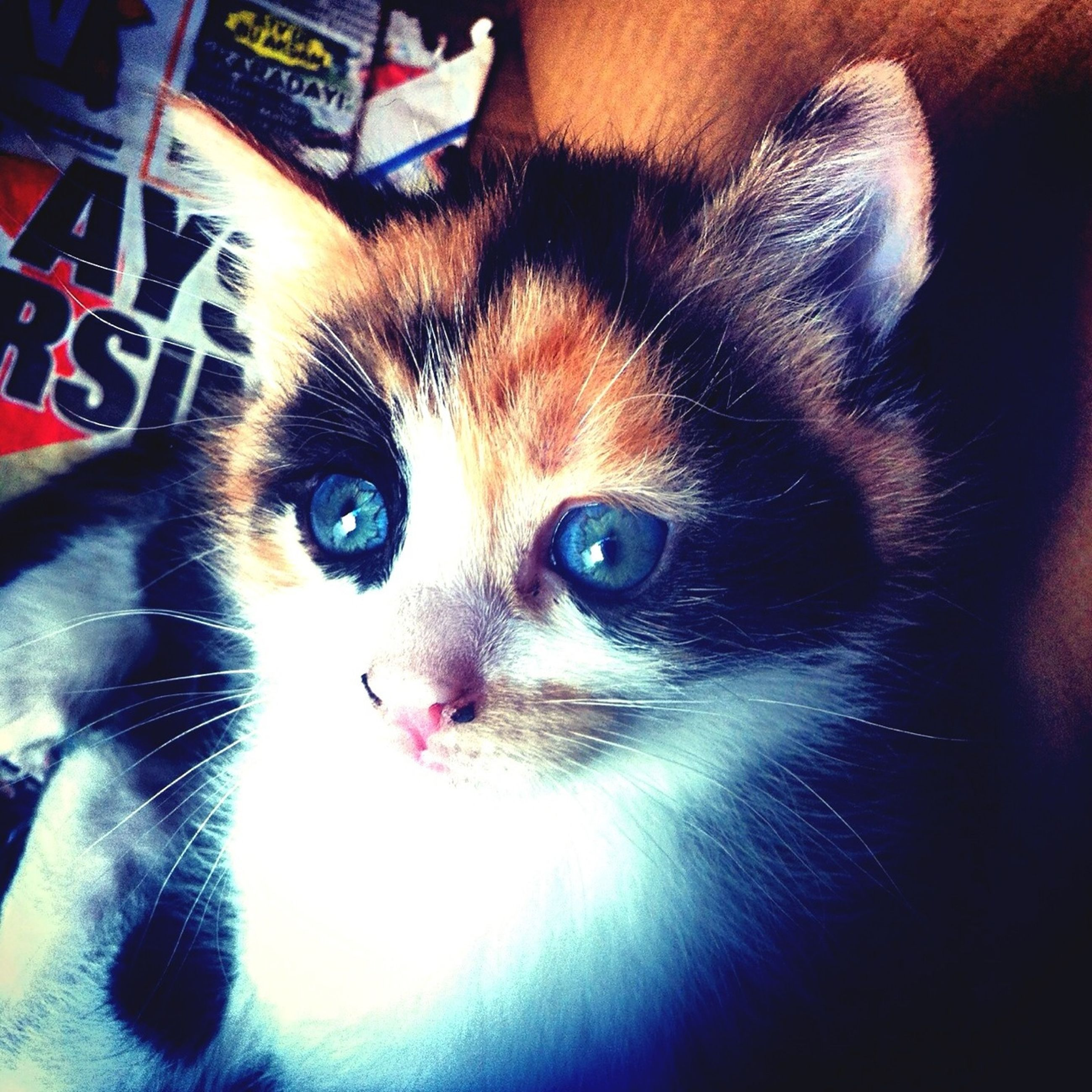 pets, indoors, domestic animals, animal themes, one animal, looking at camera, portrait, mammal, domestic cat, cat, whisker, feline, close-up, high angle view, animal head, home interior, relaxation, no people, animal eye, black color