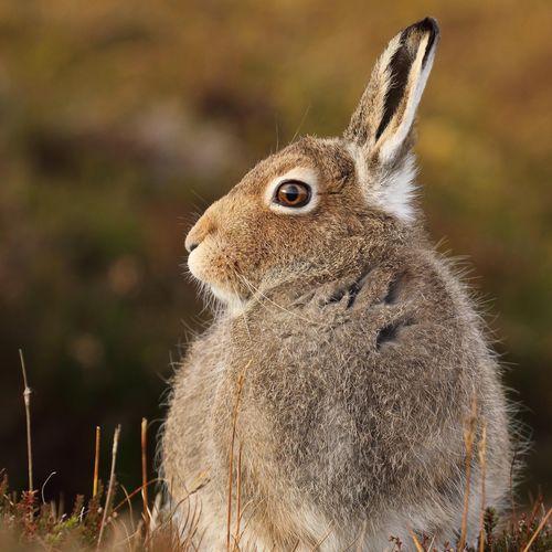 Rear View Of Rabbit Resting On Field