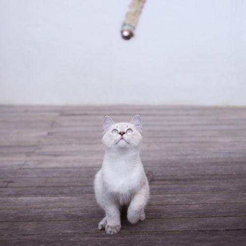 Close-up of cat on hardwood floor