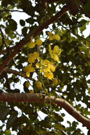Flower Plant Tree Growth Yellow Low Angle View Branch Beauty In Nature Flowering Plant Focus On Foreground Leaf Nature No People Day Close-up Outdoors Freshness