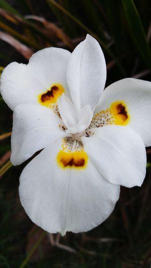 Showcasedecember Secret Gardens Taking Photos Flowers,Plants & Garden Macro_collection