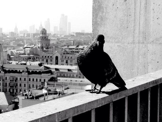 Sity Berd голубь город Москва Город с высоты вид с высоты птичьего полета A Bird's Eye View