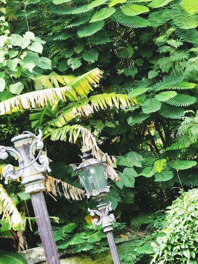 Keraton Kasepuhan Banana Leaf Banana Tree Lamp Post Street Lamps Street Lamp Lamps Lamp Vintage Lamp Visit Indonesia Vintage Classic Sculpture in Cirebon  , INDONESIA