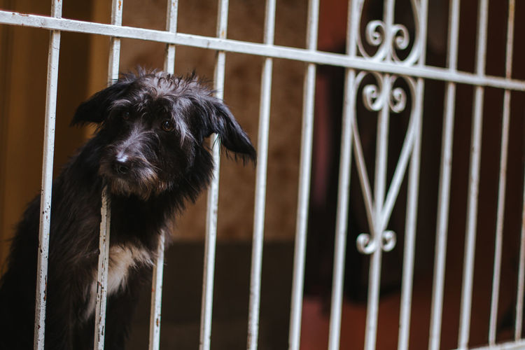 Close-Up Of Dog Looking Away Amidst Fence