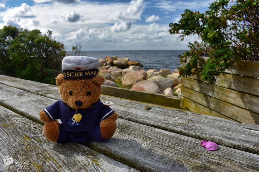 Nelson in Ringkøbing NelsonsAdventures Teddy Teddy Bear Teddybear Stuffed Toy Ringkøbing Fjord Ringkøbing Denmark Denmark 🇩🇰 Water Fjord Landscape Landscape_Collection Travel Traveling EyeEm Nature Lover Rosa Rugosa EyeEm Masterclass Travel Destinations Nature_collection Nature Sea Teddy Bears Tranquility Sightseeing