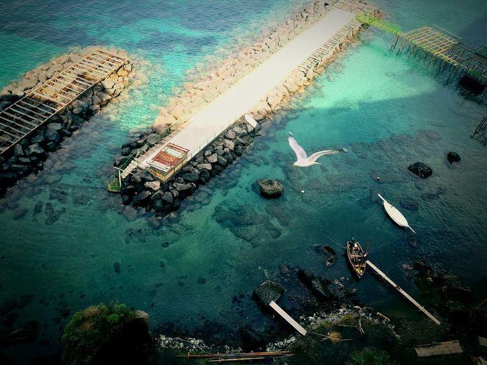 Amalfi Italy Amalfi  Coast Bird Summer Bird Flying Boat Fisherman Sea Ocean Europe