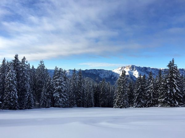 Snow Cold Temperature Winter Nature Tranquil Scene Beauty In Nature Tree Frozen Scenics Sky Tranquility White Color Weather Mountain Cloud - Sky Landscape No People Outdoors Blue Forest Pine Tree