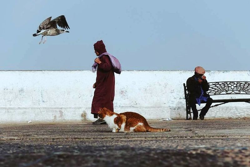 First Eyeem Photo The Places I've Been Today Morocco Elhafa EyeEm EyeEm Best Shots Nice Day Open Edit Tanger  Cat