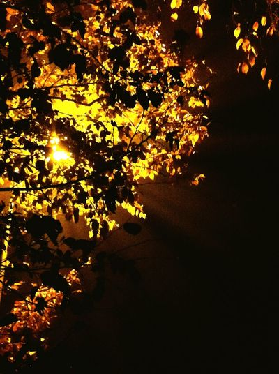 Like golden leaves at night Trees Longwalks Night Lights Leafs Golden Night BlackNGold Beauty Beautiful Beautiful Nature