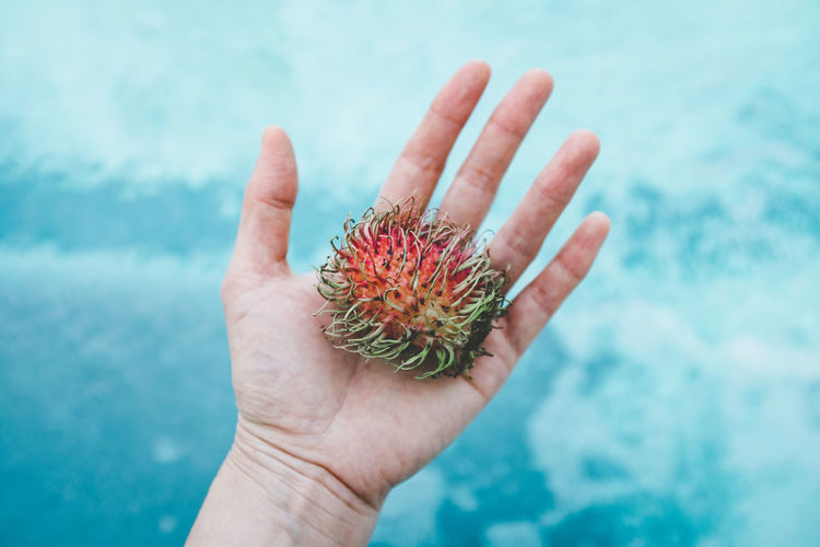 Rambutan Body Part Close-up Fruit Hand Holding Human Body Part Human Finger Human Hand One Person Pool Water