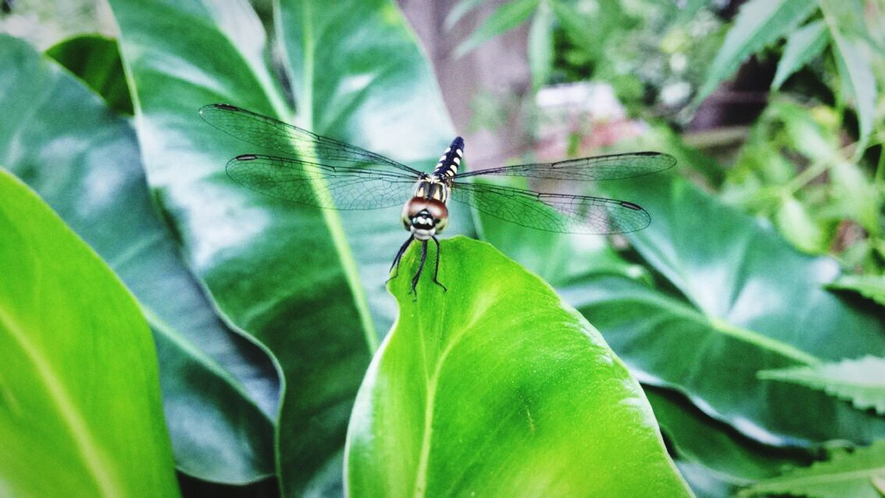 insect, one animal, leaf, animal themes, animals in the wild, green color, animal wildlife, day, growth, nature, outdoors, no people, plant, close-up, beauty in nature