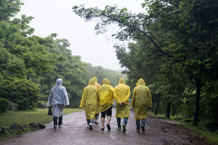 rainy day of Bijarim which is a famous forest in Jeju Island, South Korea Adult Bijarim Day Forest Full Length Growth JEJU ISLAND  Men Nature Outdoors Pathway People Rain Rain Coat Rain Coats Rainy Real People Rear View Teamwork Togetherness Tree Walking Yellow Yellow Color