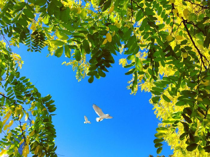 Sky Bird Tree Low Angle View Flying Plant Sky Nature Growth Day Blue No People Beauty In Nature Sunlight Animals In The Wild Green Color Animal Wildlife Outdoors Airplane