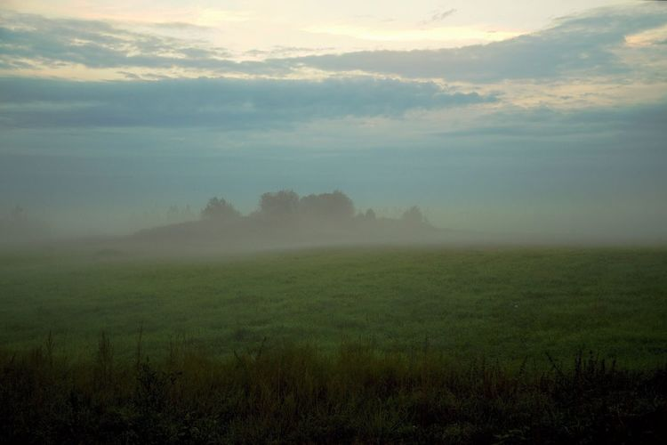 Fog Scenics -