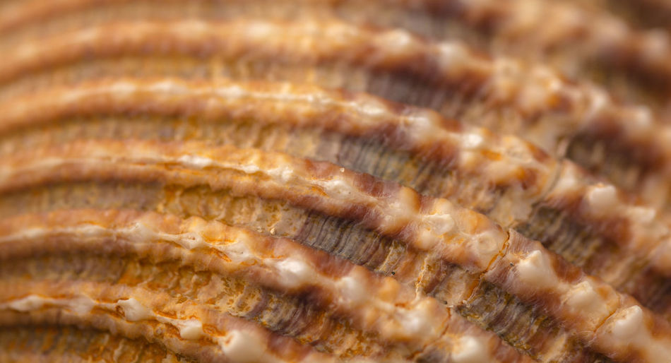 Sea shell texture. Close up photo. Backgrounds Complexity Extreme Close-up France Full Frame Hyères Intricacy Macro Photography Nature Nature At Its Finest Repetition Sea Sea Shell Shell Texture Shell Theme Texture Zoology Maximum Closeness
