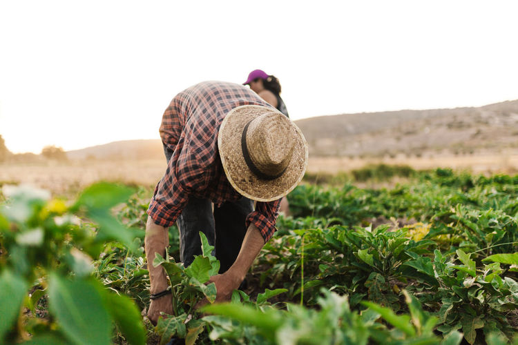Man harvesting while standing on agricultural field