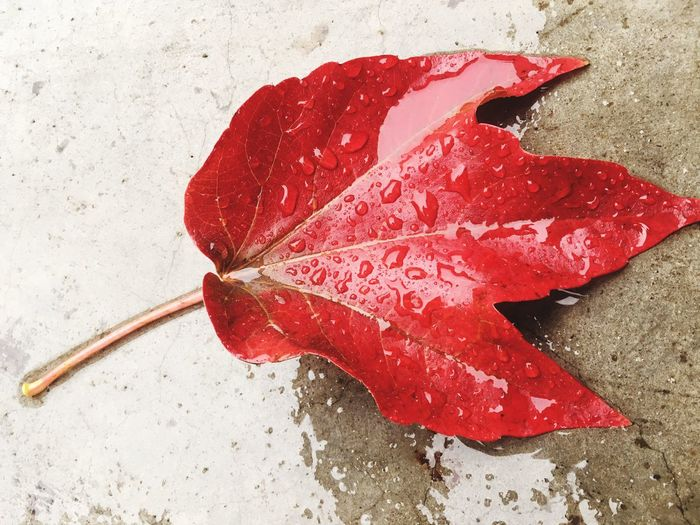 Leaves leaf Red Close-up Nature Fragility Rain autumn