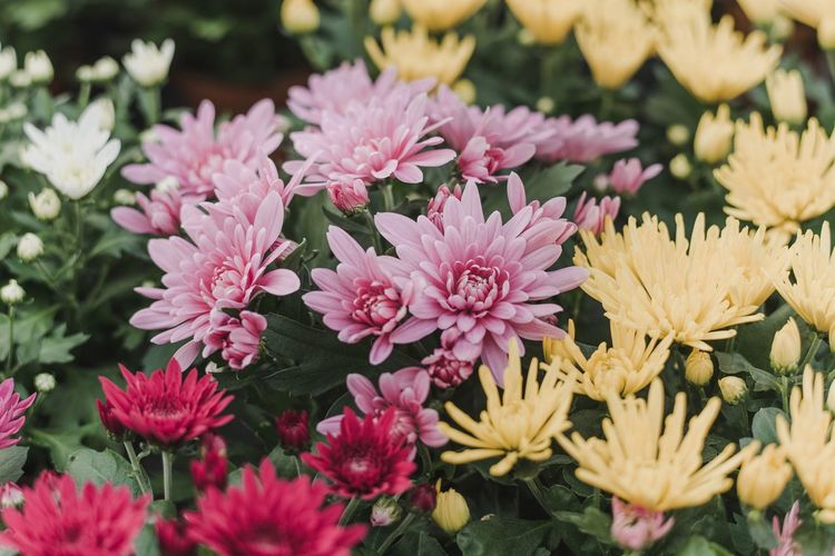 Flower Petal Fragility Nature Freshness Beauty In Nature Flower Head Pink Color Growth Leaf Plant Close-up Outdoors No People Day Blooming Small Yellow Flower Pink Flower Flower Field