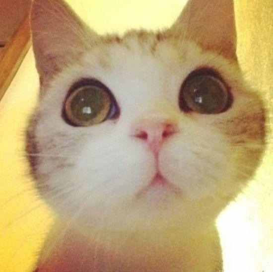 Cute Pets Cat♡ Love ♥