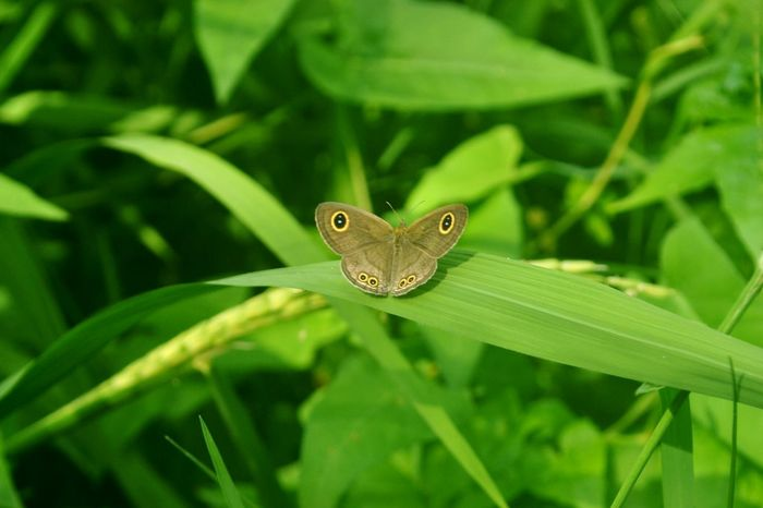 Animal Themes One Animal Nature Animals In The Wild Insect Green Color Leaf Animal Wildlife Animal Plant Close-up Environment No People Outdoors Beauty In Nature Day Butterfly - Insect