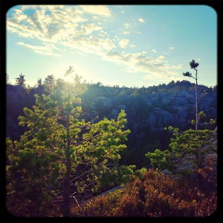 25 Days Of Summer Mountains Trees Sunset Mountain top in Norway!
