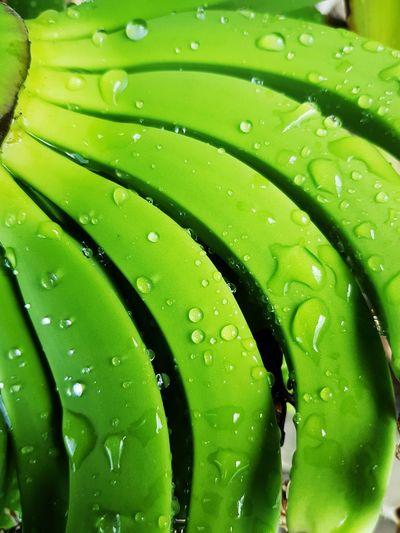 Full frame shot of wet bananas