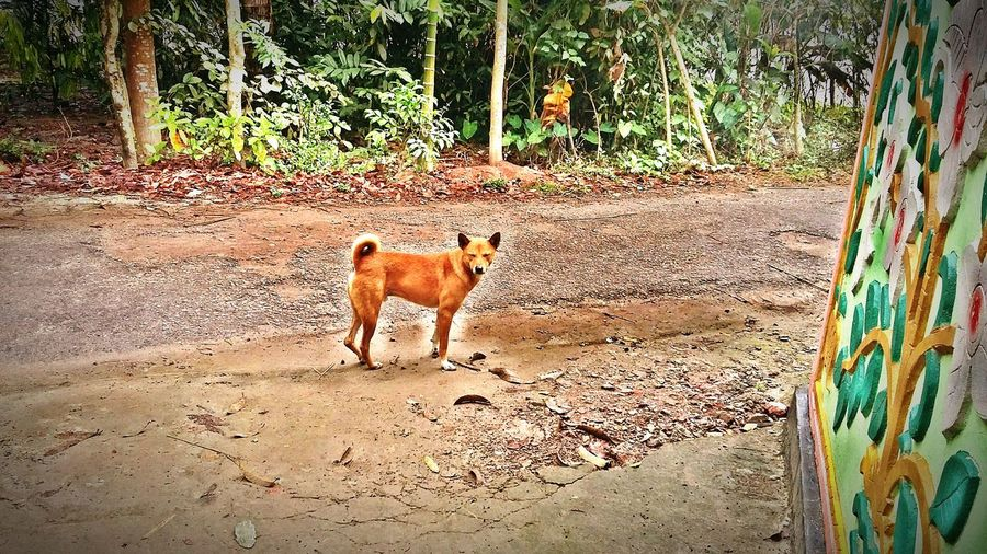 Speechless_Dog Domestic Animals Animal Wildlife Bangladesh 🇧🇩 No People Standing Dog Full Length One Animal Mobilephotography